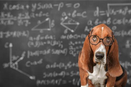 ¿Es posible estimular la inteligencia de los perros?