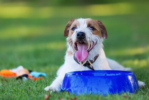 Perro mojado con agua bebe