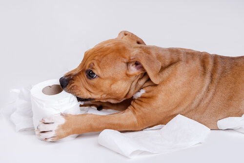 Perro mordiendo papel higiénico