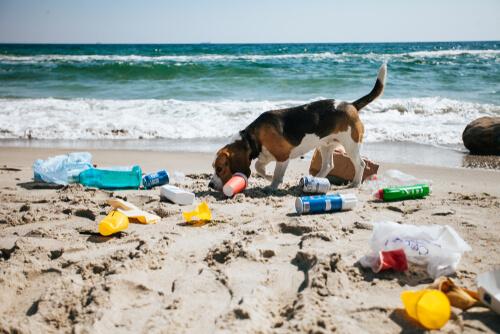 Perro en una playa contaminada