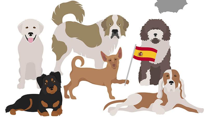 Principales asociaciones españolas de derechos de los animales