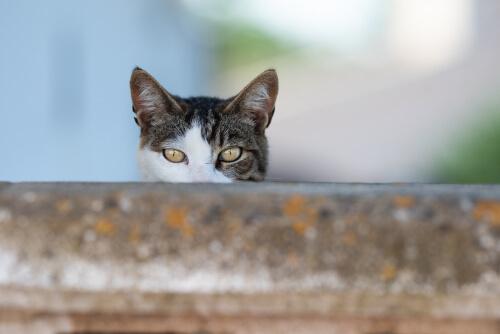 ¿Qué factores pueden determinar la personalidad felina?
