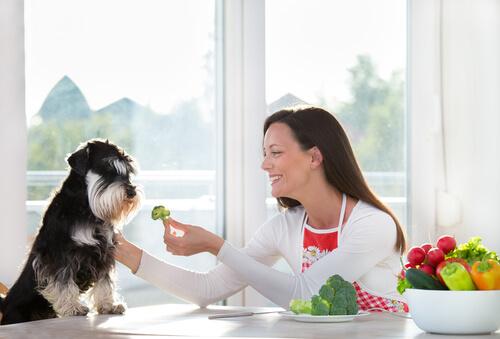 ¿Pueden los perros comer vegetales?