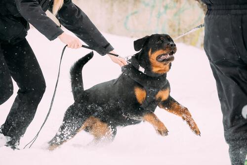 Ataque de un perro potencialmente peligroso: responsabilidad civil