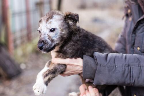 Tiña en cachorros: síntomas y tratamientos