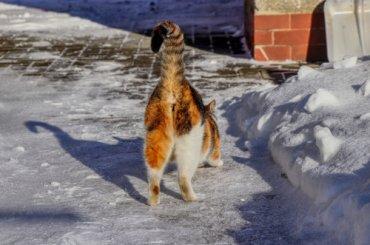 ¿Por qué huele mal el trasero de algunos gatos?