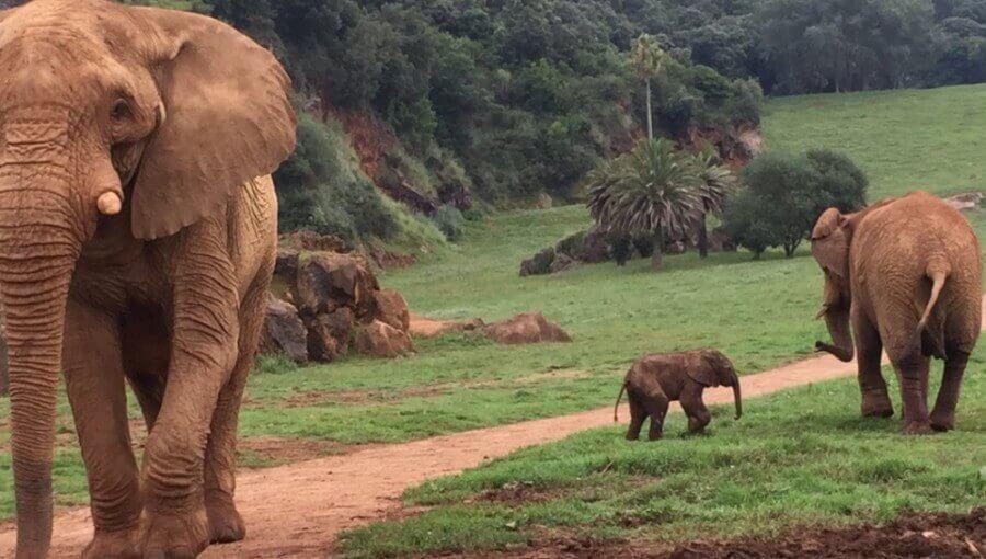 Zoológicos como aliados de la biodiversidad
