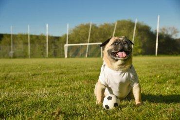 Animales y deporte, aspectos legales