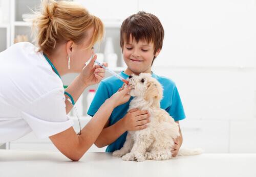 Antibióticos para perros vía oral