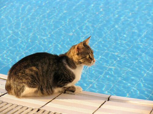 ¿Cómo se mantienen los gatos frescos en el calor?