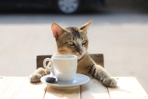 El café es una de las sustancias comunes que pueden afectar a tu gato