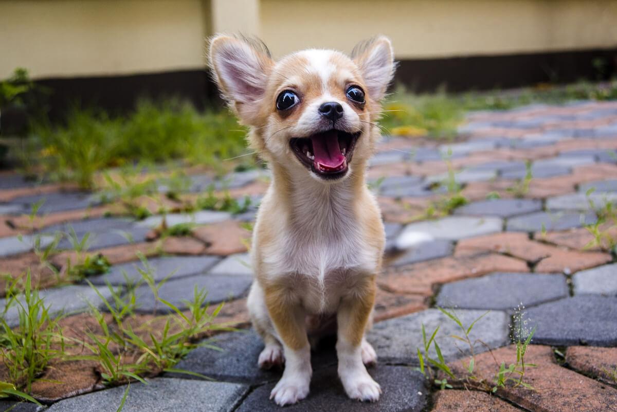 Un perro pequeño.