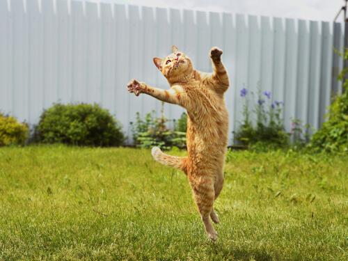 Demostración de que los gatos son tan ágiles y flexibles