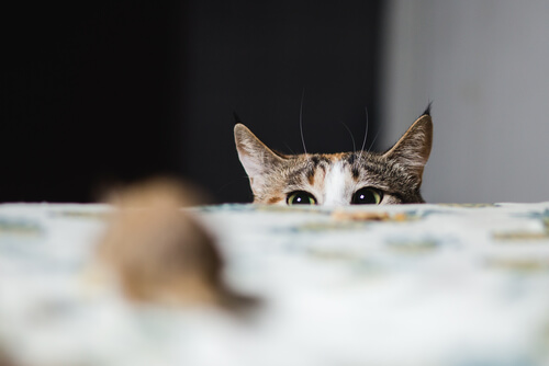 Gato asomándose