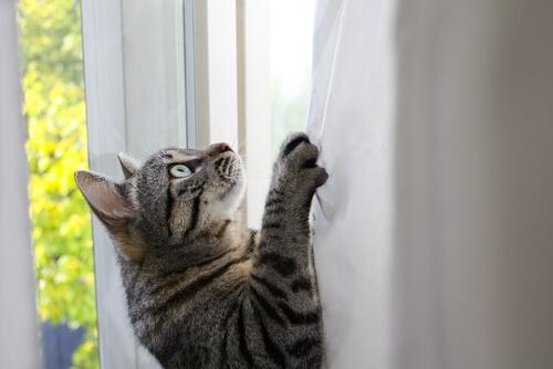 ¿Por qué los gatos son tan ágiles y flexibles?