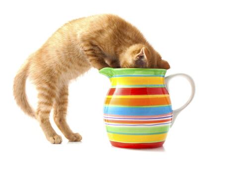 7 sustancias comunes que pueden afectar a tu gato