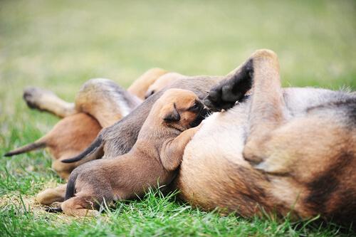 Mortalidad neonatal en cachorros
