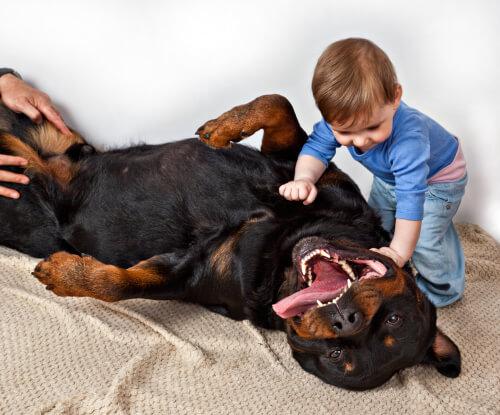 Niño juega con rottweiler
