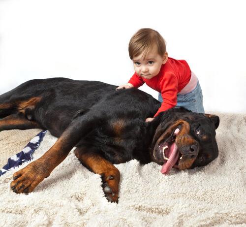 Niño con rottweiler tumbado
