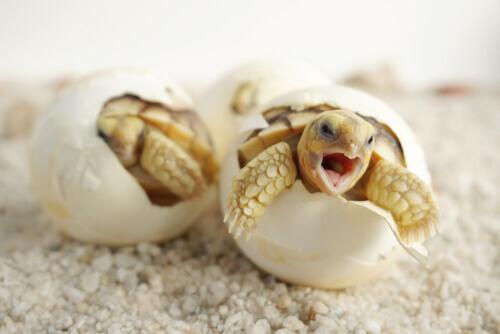 Origen de los reptiles representado con la rotura del cascarón