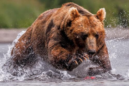 Los animales salvajes en nuestro Código Penal