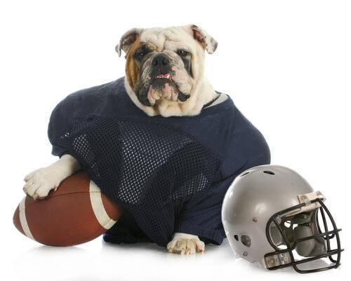 Perro con accesorios de rugby