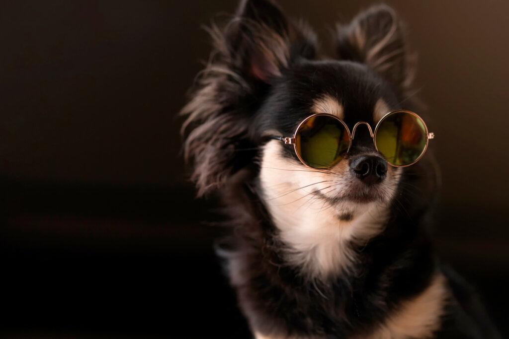 Melanomas en perros: causas y tratamientos