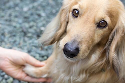 Temblores en los perros: ¿a qué se deben?