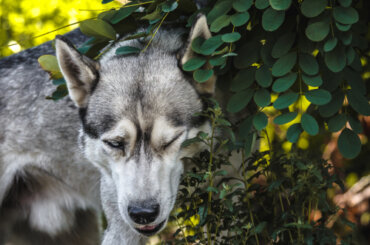 ¿Por qué frota un perro la cabeza y el hocico en la hierba?