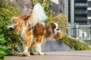 Cáncer de vejiga en perros: síntomas y causas