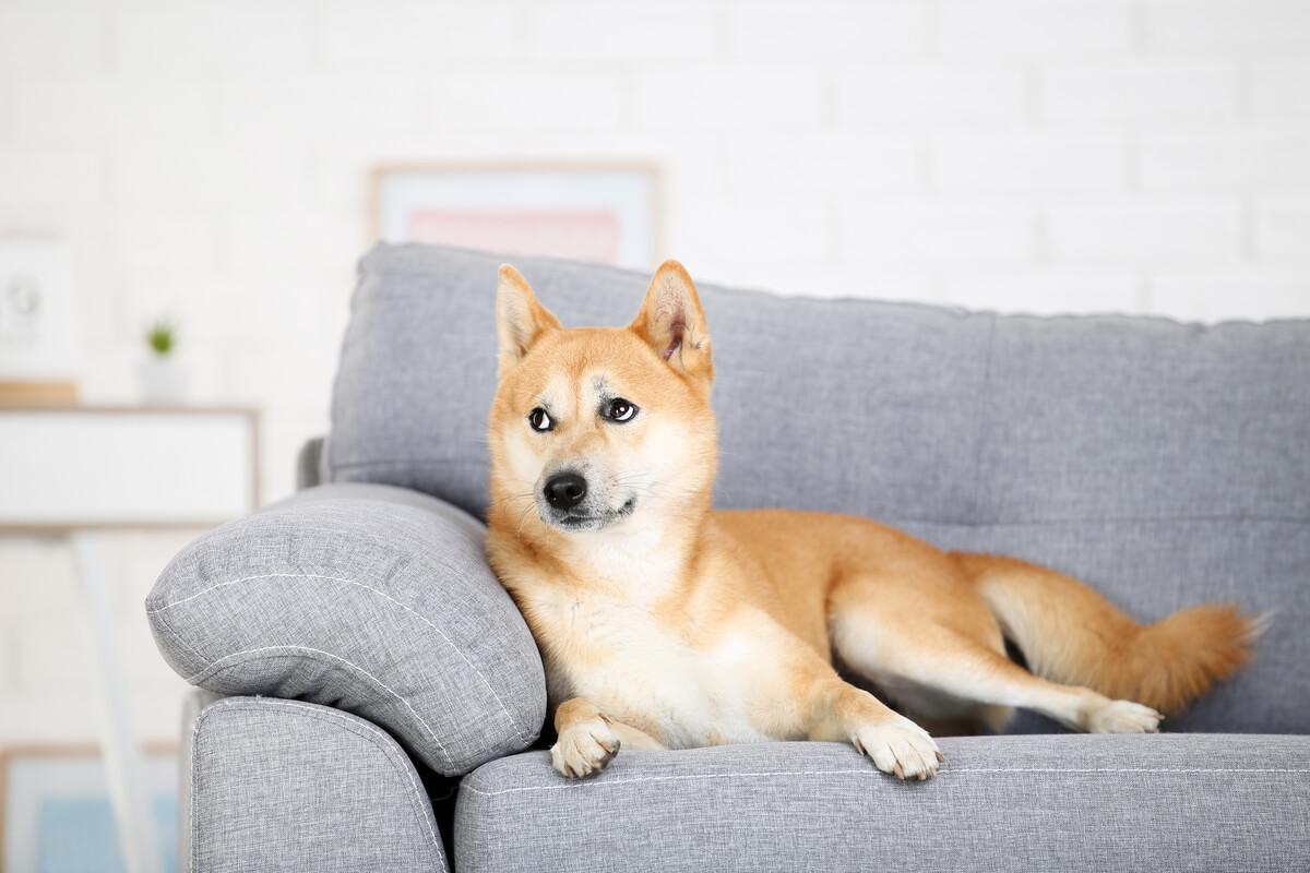 Las cinco razas de perros para tener en apartamentos pequeños