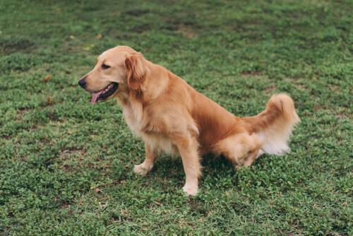 Dietas específicas para perros que padecen una enfermedad renal