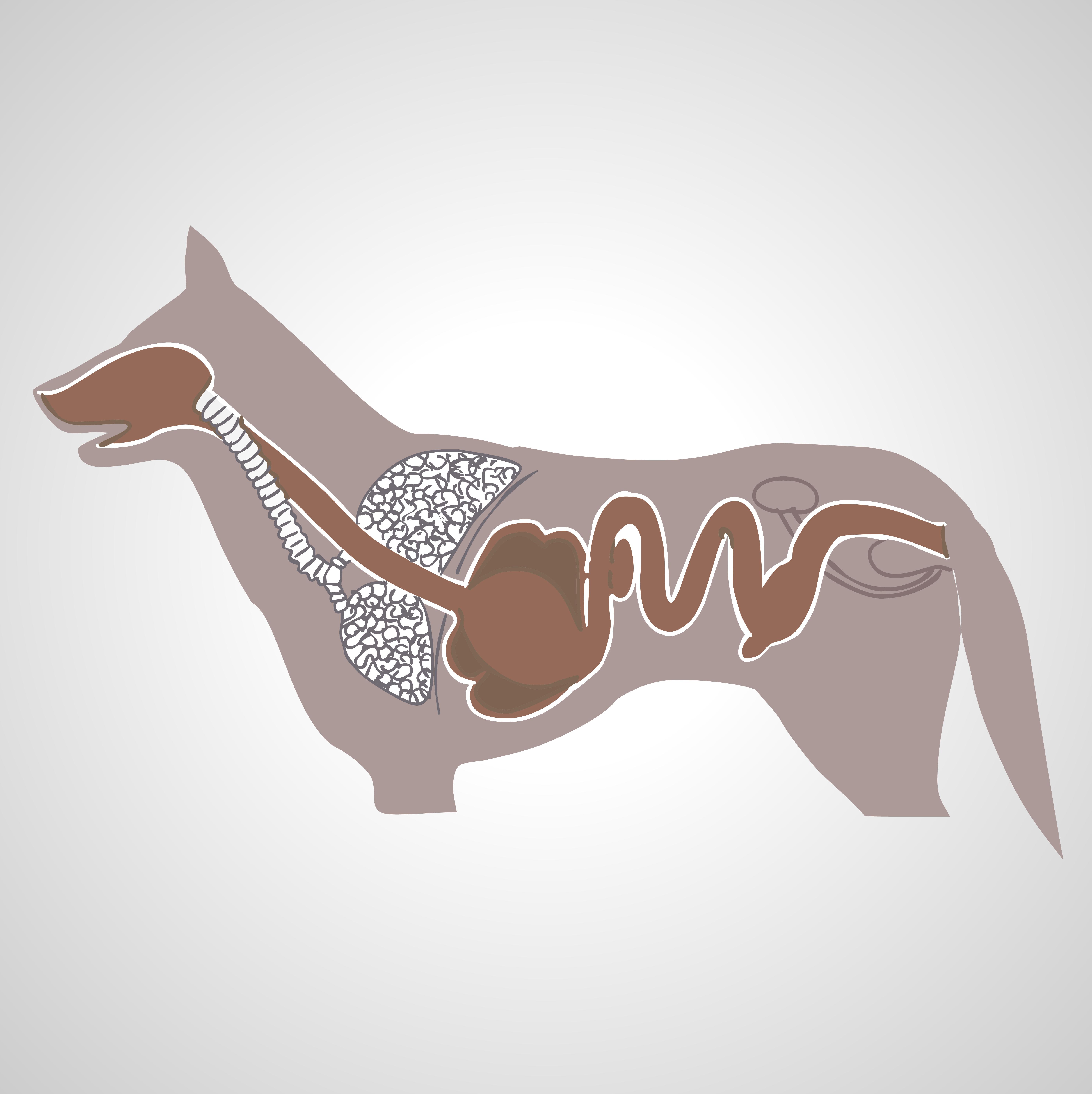 Proceso digestivo del perro