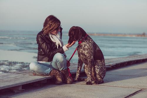 El pointer es una de las razas de perros más sociables