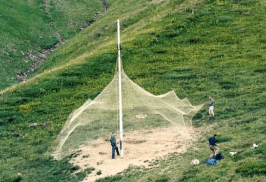 La red caída es uno de los métodos de captura del rebeco