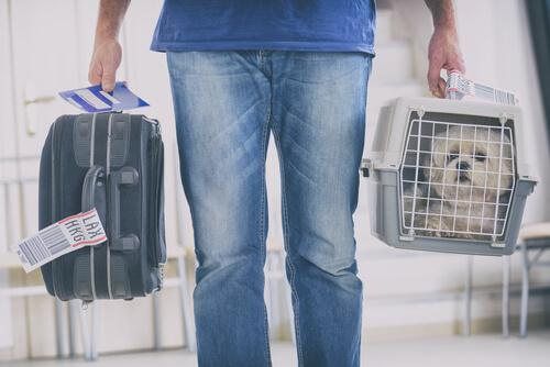 El traslado seguro de animales a otro país
