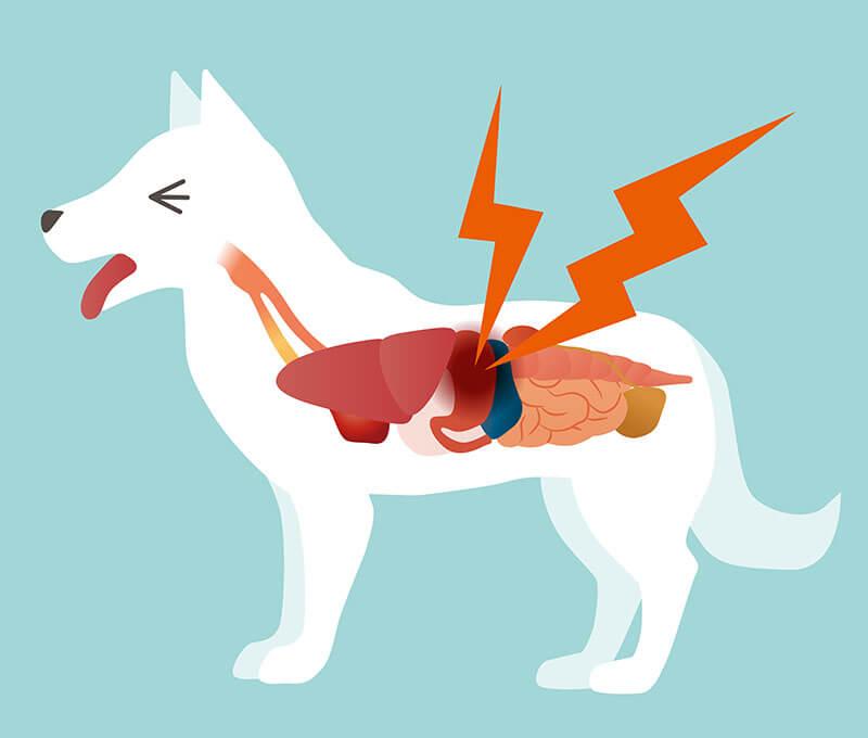 Úlcera gástrica en perros: ¿qué hacer?