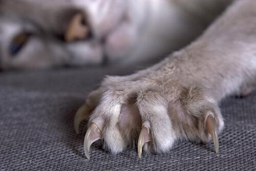 5 cosas que no sabías sobre las zarpas de los felinos