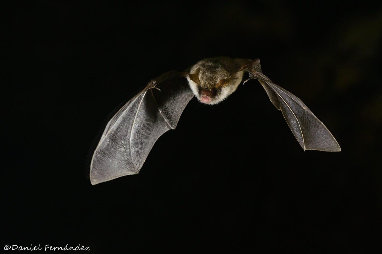 La conservación de los murciélagos es importante.