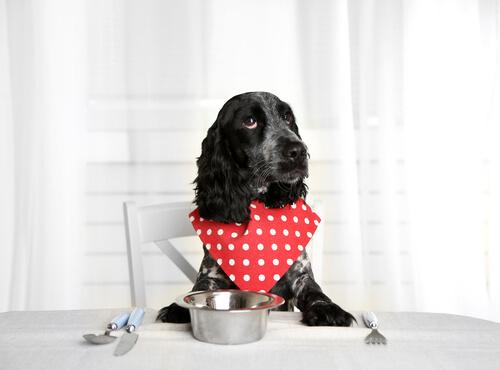 7 consejos para personas que alimentan a sus perros con comida húmeda