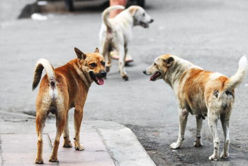 ¿Es legal alimentar animales callejeros?