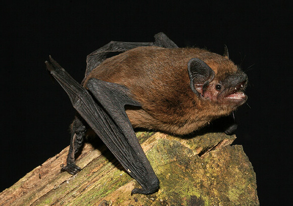 bats of the Iberian Peninsula