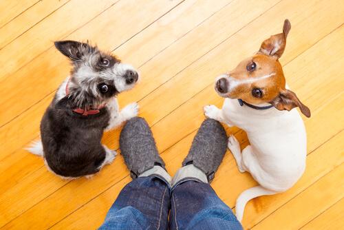 Atención de los perros hacia el ser humano