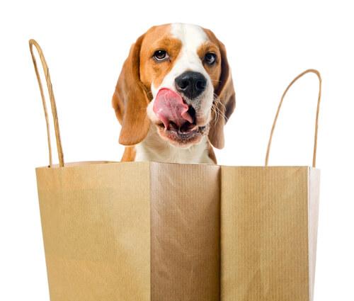 Beagle con bolsas de la compra