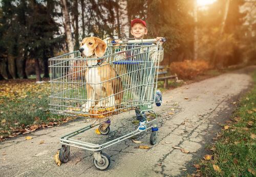 Beagle en un carrito de la compra empujado por un niño