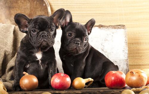 Bulldogs con manzana y cebolla