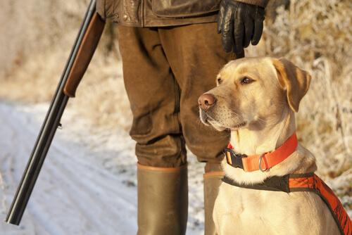 ¿Es delito la caza sin el seguro obligatorio?