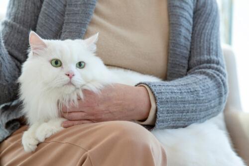 Cómo la vejez afecta al comportamiento de tu gato