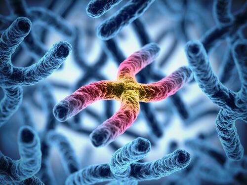 Los cromosomas influyen en la longevidad del perro