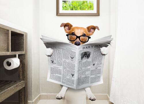 Métodos para detener la diarrea en perros
